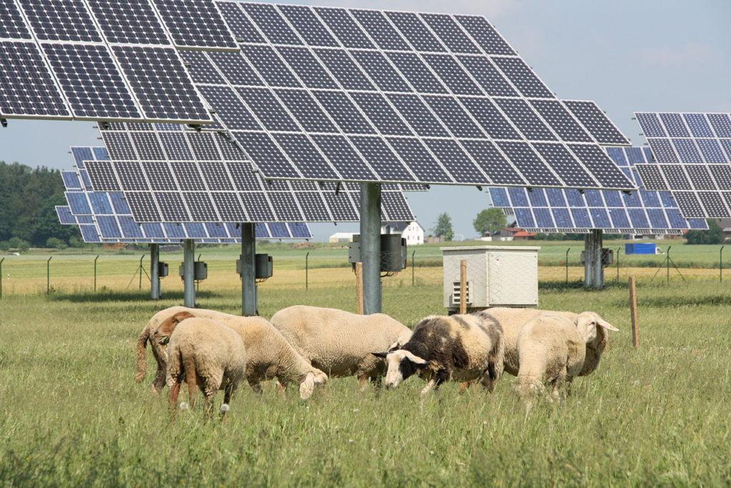 Felder können mit Solaranlagen und einer landwirtschaftlichen Industrie genutzt werden. (Bild: Von GrüneFraktionBayern - Flickr: 04 Die Anlage ist so ausgelegt dass sie gleichzeitig als Weide genutzt werden kann, CC BY 2.0)